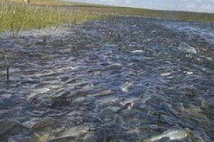 Народная рыбалка в Астрахани