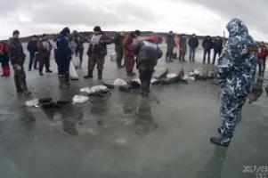 Народная рыбалка на Псковском озере